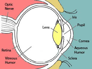 Cataracts and cataract surgery